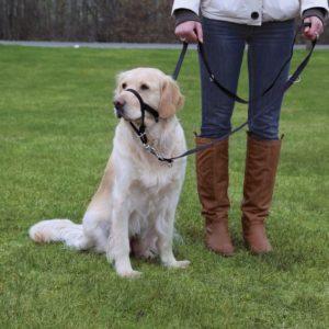 Dog  TOP TRAINER (trixie) - XL/kurz (viz. popis produktu)